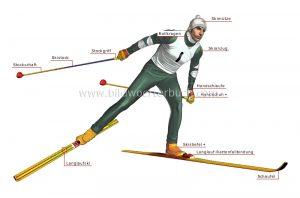 der Langläufer - narciarz biegowy