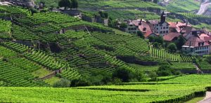 Szwajcaria z lotu ptaka - winnice