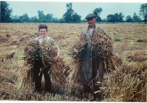 Rolnictwo - słownik polsko-niemiecki online