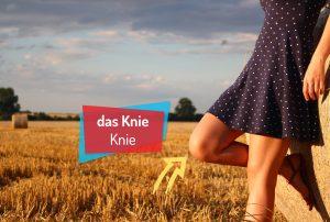 Słownik wideo z wymową niemieckojęzycznego lektora